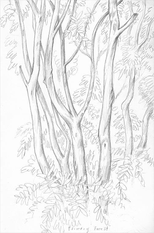 CostaRicaCloudForest.jpg