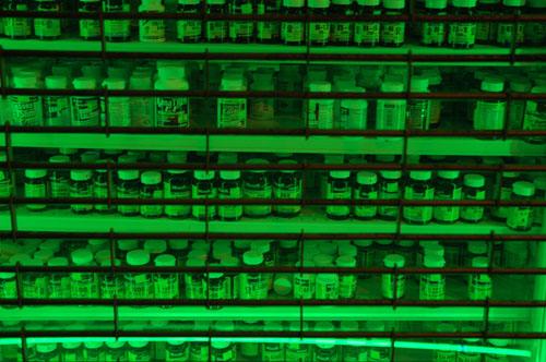 PillsStorefrontWeb.jpg