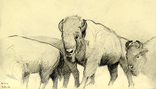 kon_bison.jpg