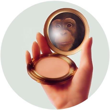 monkey-compact.jpg