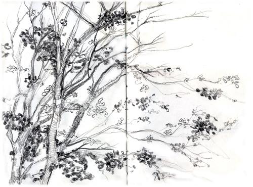 kon_branches.jpg